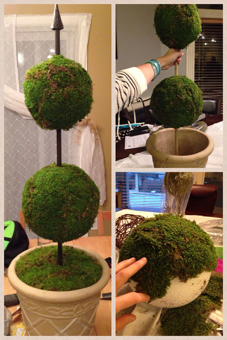 Diy topiary!! I totally made this! Moss topiary diy