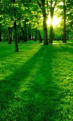The quietness of the morning on a bed of green, a summer day.