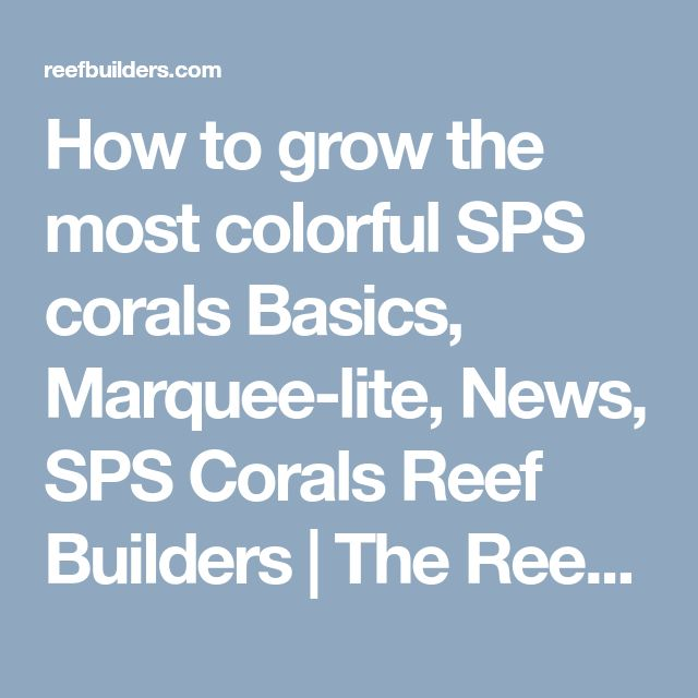 How to grow the most colorful SPS corals Basics, Marquee-lite, News, SPS Corals Reef Builders | The Reef and Marine Aquarium Blog