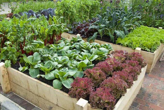 #Aquaponic #farming #gardening