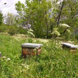 Producteur de miel - Miellerie de Serre Chevalier - Hautes Alpes