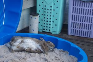 bunny zandbak