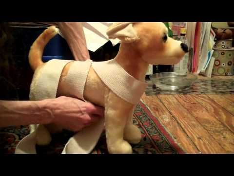 DIY Thundershirt: How to Make Your Own Canine Anxiety Wrap | K9 of Mine