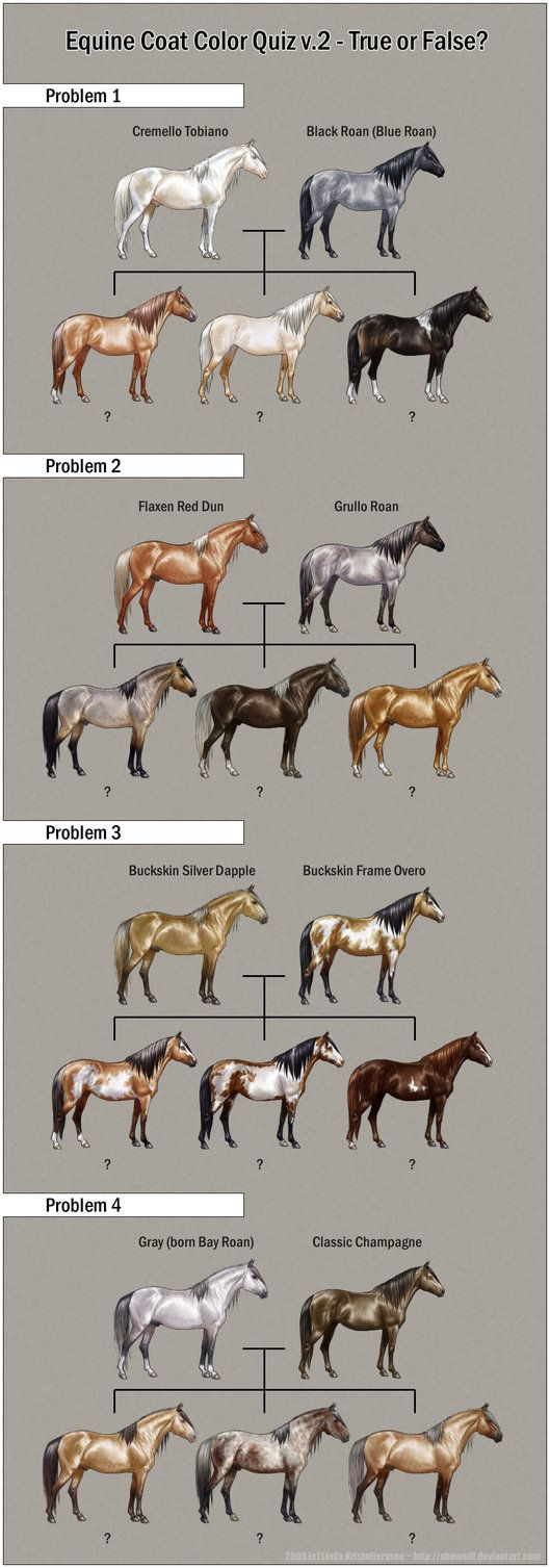 34 best equine color genetics markings images on pinterest deviantart more like chestnut color genetics chart by magicwindsstables nvjuhfo Choice Image