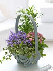 Summer Mixed Planted Basket