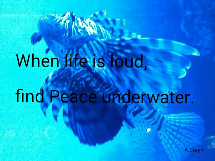 When life is loud find peace underwater. Aquariumcapetown