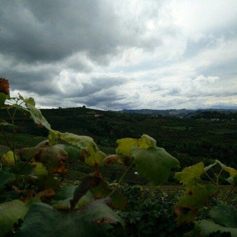Finita la vendemmia....#harverst #harvest2015 #vendemmiaitalia #vendemmia2015 #fratelliaimasso #dianodalba #langheunesco #langhe #unesco #nofilter #igerslanghe #ig_cuneo #instalanghetti #ig_Piemonte #cool #wine #coloreitaliano #finish #end #vino