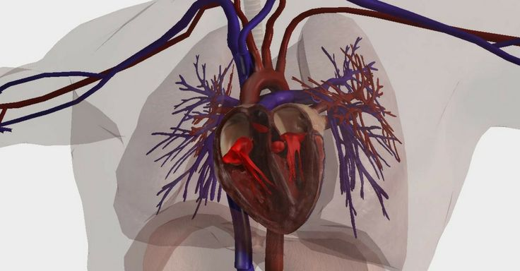 Não Perca!l 14 sintomas que indicam a má circulação sanguínea - #