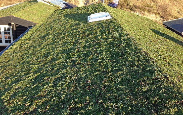 Der er eftrespørgsel på grønne tage, konstaterer Phønix Tag. Foto: phonixtag.dk
