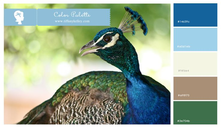 how to build an aviary for peacocks