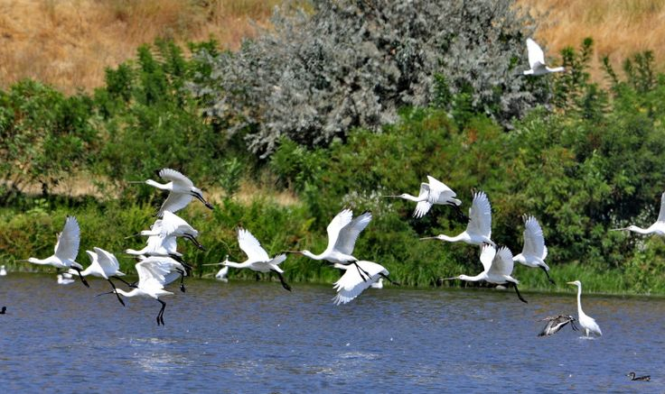 Danube Delta Romania Black Sea Delta Dunarii eastern Europe birds