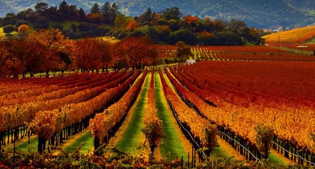 Napa Valley; could live here.