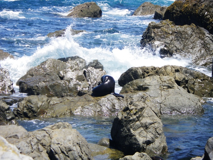 Baby Seal grooming. Such a priceless moment to capture it with the waves coming in.