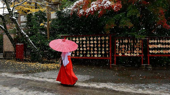 Enchanting Photographs of Snow in Tokyo  The last time Tokyo saw the snow in November was in 1962. In general Tokyo does not see snow very often. However this week the inhabitants of the Japanese capital had a great surprise discovering Tokyo enveloped in a soft and light white cover.            #xemtvhay