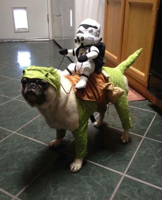 Aterrorizantes ideias do fantasias de Halloween para cachorros