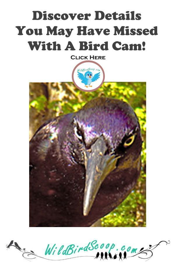 Backyard Birds Reveal Their Secrets When A Trail Camera Or Bird Cam Are In Use See Details Like Never Backyard Birds Attract Wild Birds Backyard Birds Feeders