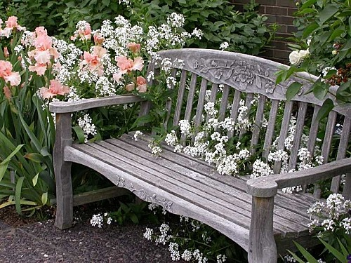 A wonderful bench for enjoying the blooms of iris 'Beverly Sills'.