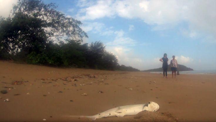 ICYMI: Al menos una docena de tiburones aparecen muertos misteriosamente en un playa de Australia (VIDEOS)