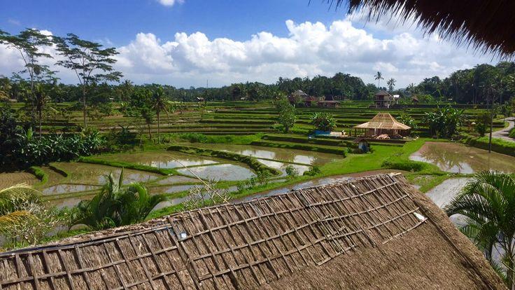 Campuhan Rice Paddies, Ubud, Bali