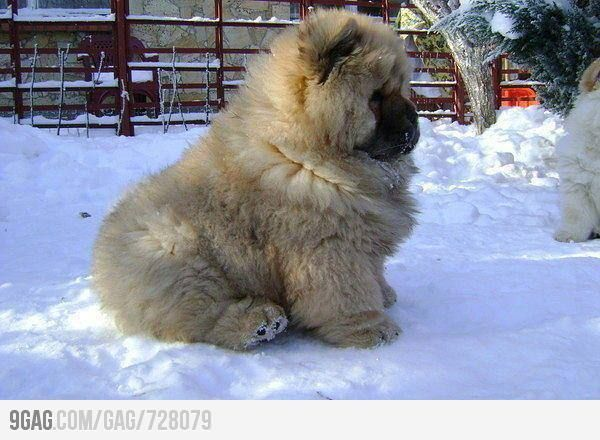 Sometimes I sits & thinks; sometimes `i just sits. (Caucasian Shepherd dog)