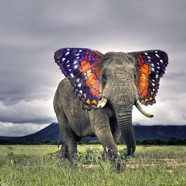Un éléphant avec les oreilles peints en papillon