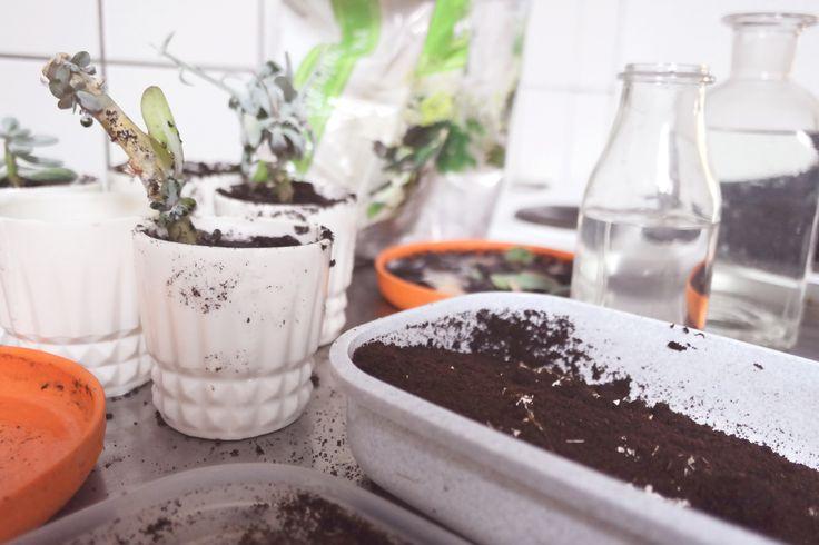 Coffee + egg fertilizer.. Soil, mess and succulents
