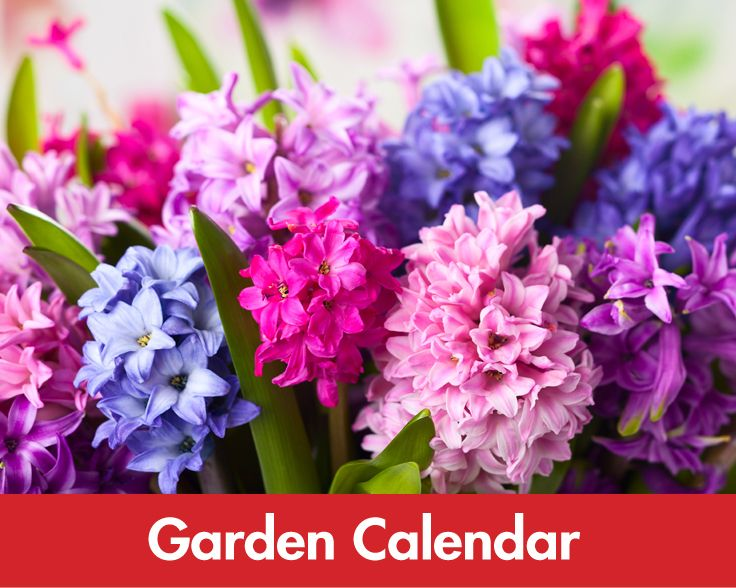 Find the perfect time to plant and maintain your garden.
