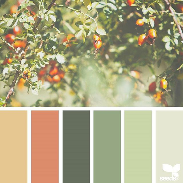 today's inspiration image for { fresh hues } is by @tangledgarden ... thank you, Margaret, for another inspiring #SeedsColor image share!