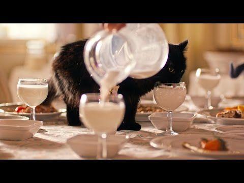 Streetplanneur – Le LOTO libanais expédie les chats noirs du pays dans un hotel 5* de Nouvelle-Zélande