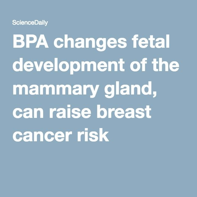 BPA changes fetal development of the mammary gland, can raise breast cancer risk
