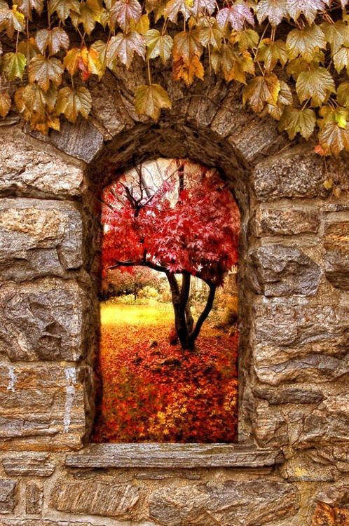 - Autumn window - autumn landscape with trees, leaves and stones in the colors brown, red, orange and yellow: