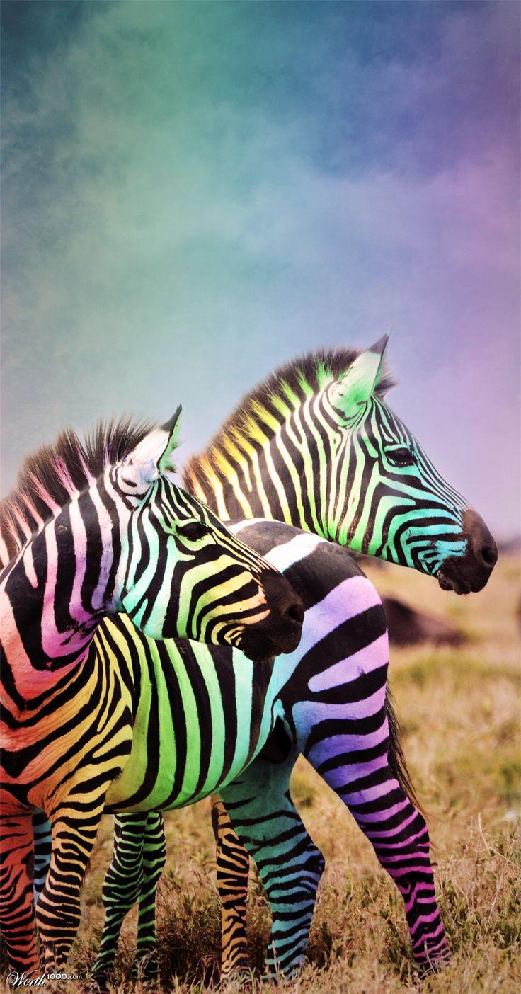 Colorful Zebra Print Nail Art Tutorial: 58 Best Penguin, Panda And Zebra Cross Stitch Images On