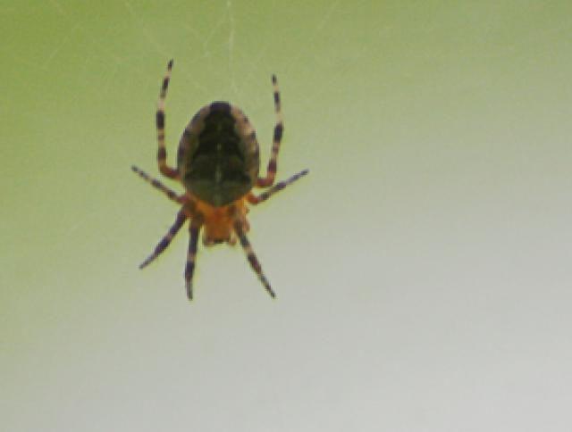 The 10 Most Common Phobias