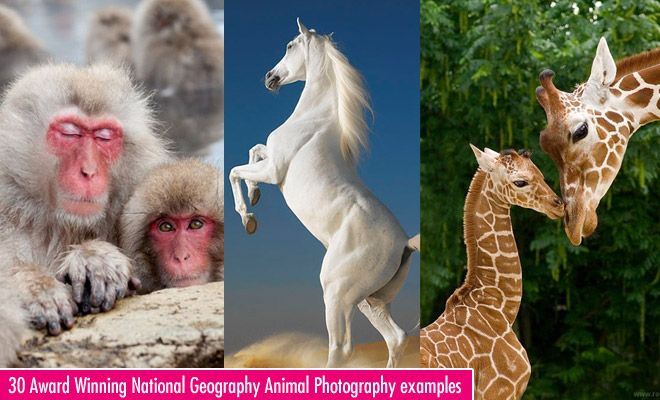 30 Incredible and Award Winning National Geography Animal Photography examples. Follow us www.pinterest.com/webneel