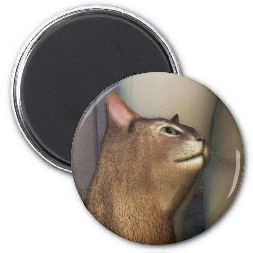 Abissinian Cat 2 Fridge Magnets