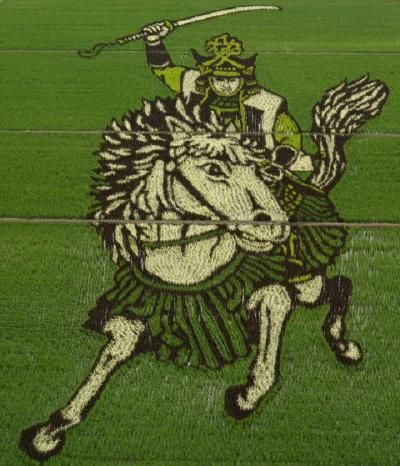 Rice paddy art. This image is not photoshopped; it was created by planting different varieties of rice.: Farmers, Japan Rice, Cropart, Rice Paddi, Crop Art, Rice Fields, Japanese Rice, Fields Art, Crop Circles