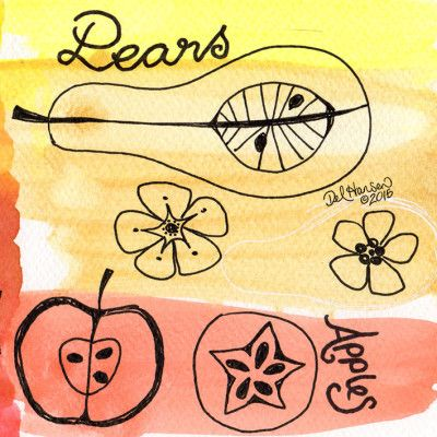 100 Sketch Challenge – Sketch 30 // By Del Hansen // pears and apples- pen, watercolour
