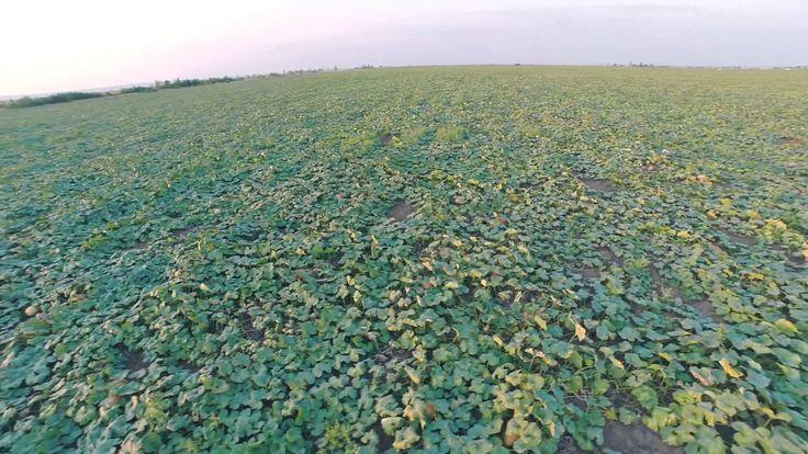 Капельный полив капельное орошение Новый век агротехнологий