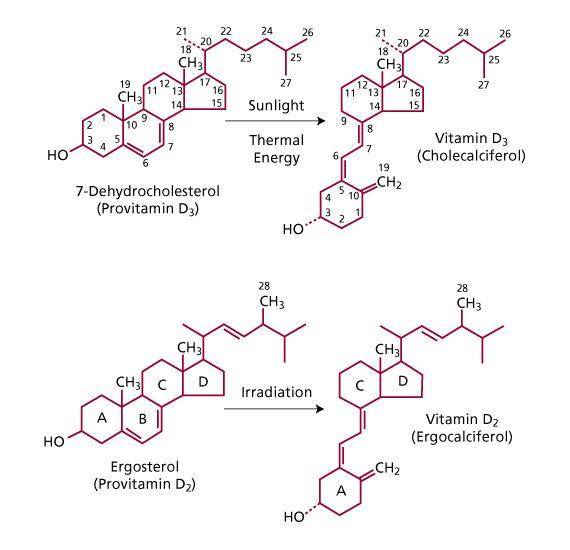 Vitamin D1 Structure 16 best Educa Borras i...