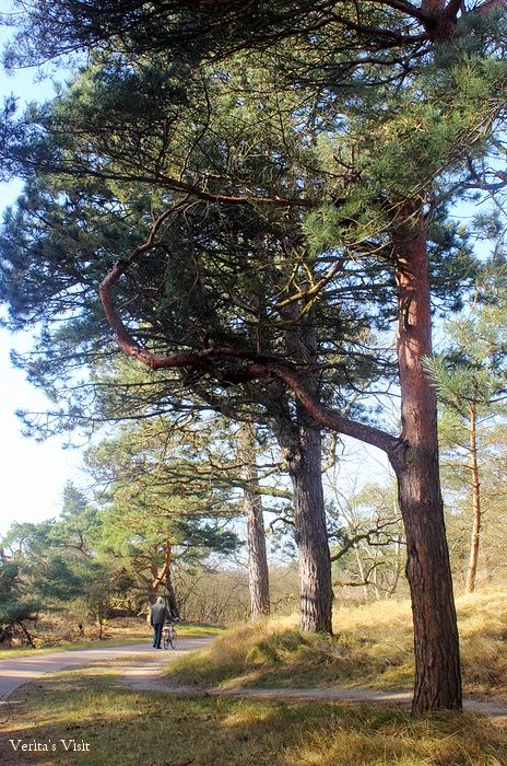 Just a short bike ride away from The Hague city centre is this natural area: dunes, beach and a bit of forest.