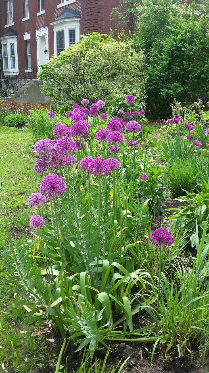 Westmount Garden