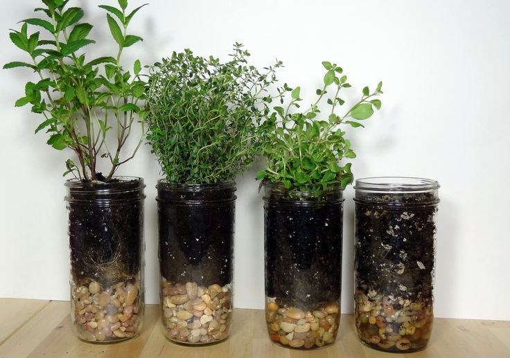 Mason Jar Herb Planters : Use a mason jar to create herb planters. They don't require a lot of space and you can put them anywhere there's adequate lighting.  I…