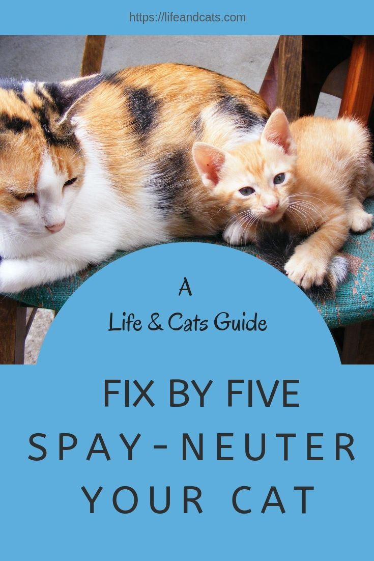 Spay Neuter Your Cat Cats Cat Care Kitten Care