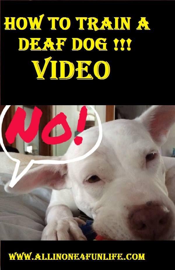 How To Train A Deaf Dog Video Dog Dogs Animal Animlas Train
