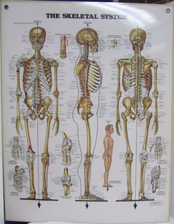 essay speech about family outing  human skeletal system