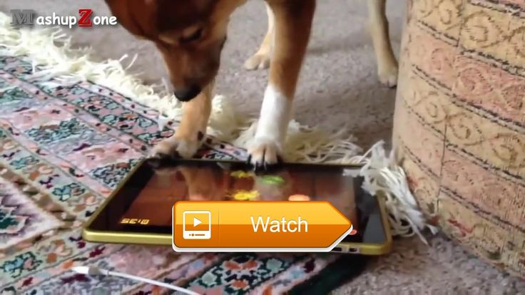 Most Funny Cats And Dogs Playing Fruit Ninja Compilation    on Pet Lovers