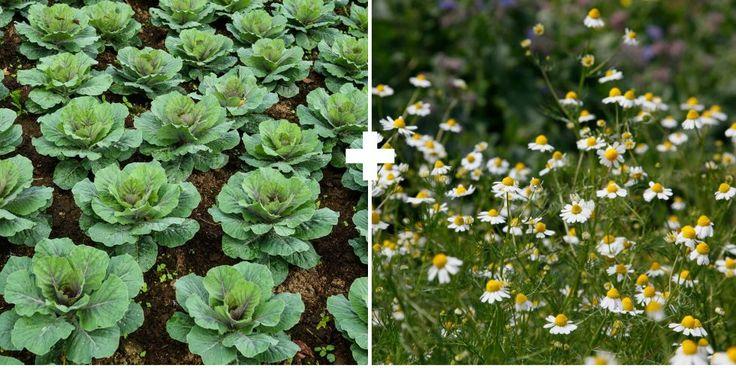 437 Best Growing Food Images On Pinterest Lattice Quilt 400 x 300