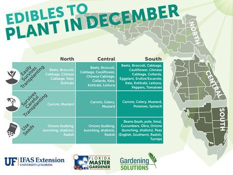 Gardening Solutions Infographics - Gardening Solutions - University of Florida, Institute of Food and Agricultural Sciences