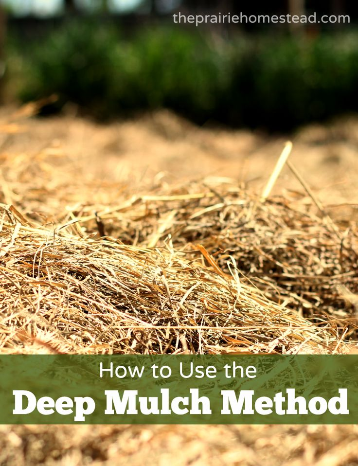 How to Deep Mulch Your Garden with Hay