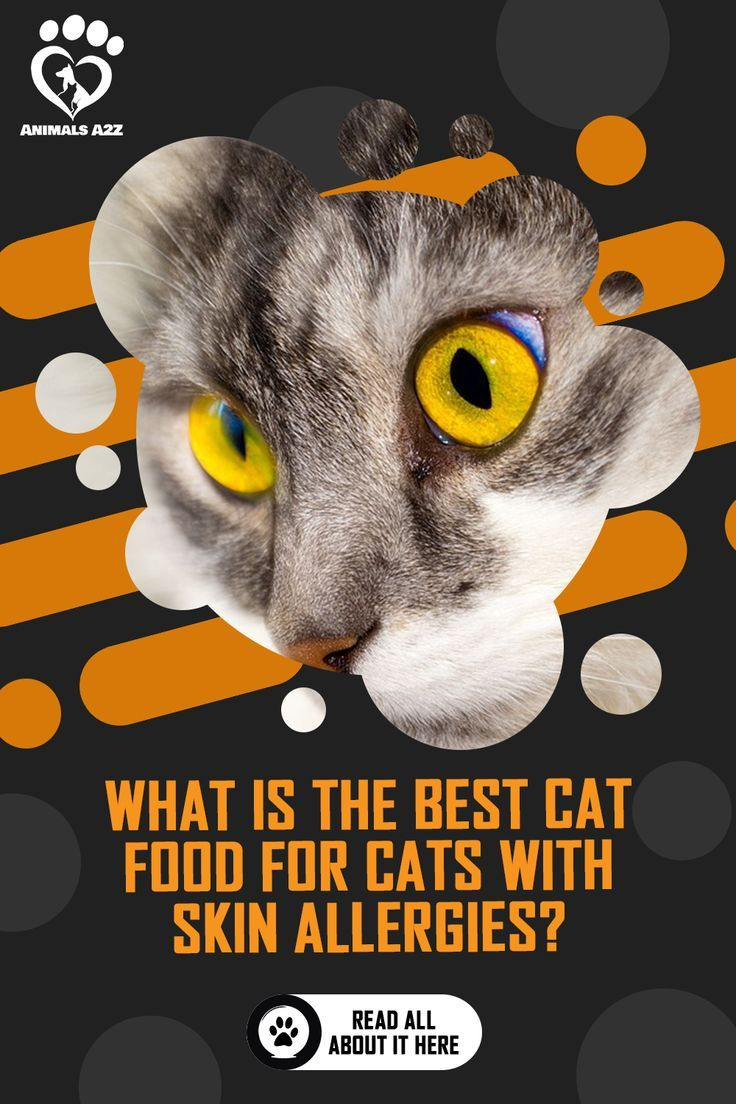 What Is The Best Cat Food For Cats With Skin Allergies Detailed Answer In 2020 Best Cat Food Cat Allergies Cat Food